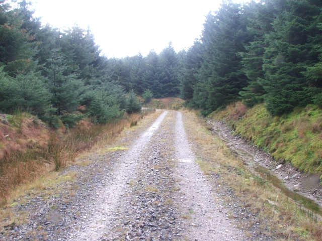 Forestry Road on West Moor.