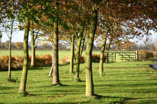Roadside and farmland between Crockey Hill and Naburn