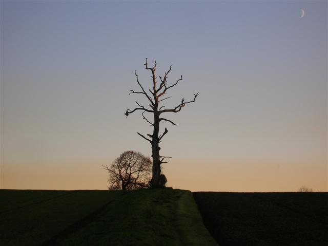 Field boundary near High Catton