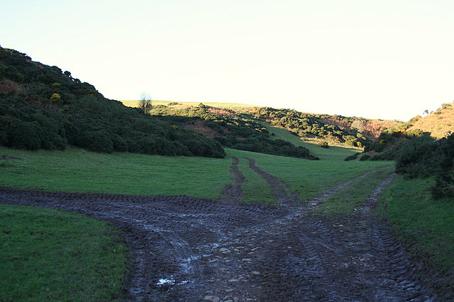 Take your pick! Tracks through the whins west of Towie