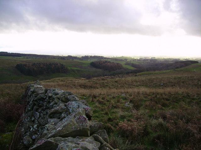 Looking Towards Springs Wood