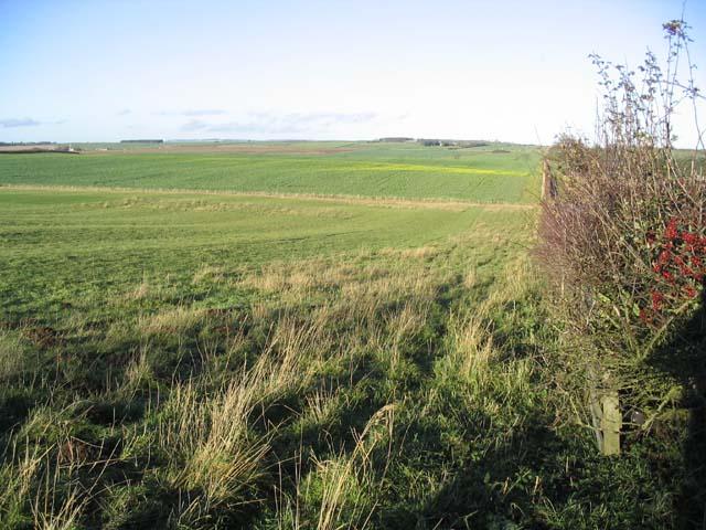 Rich farmland at East Allerdean