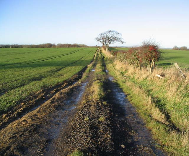 A track through arable fields
