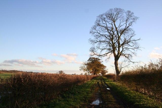 Long Farm Lane