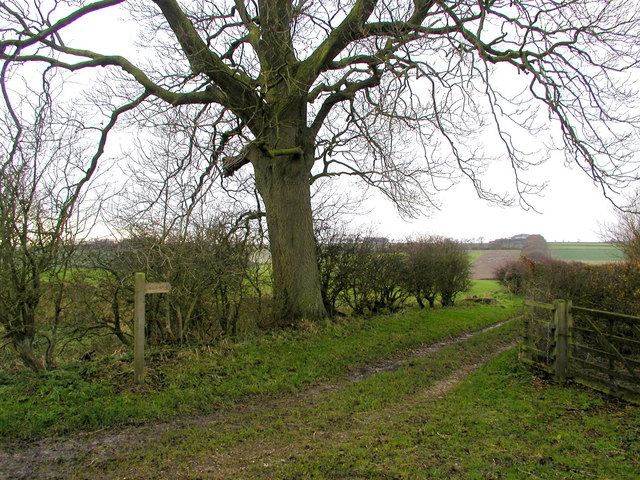 The Wolds Way to Thixen Dale