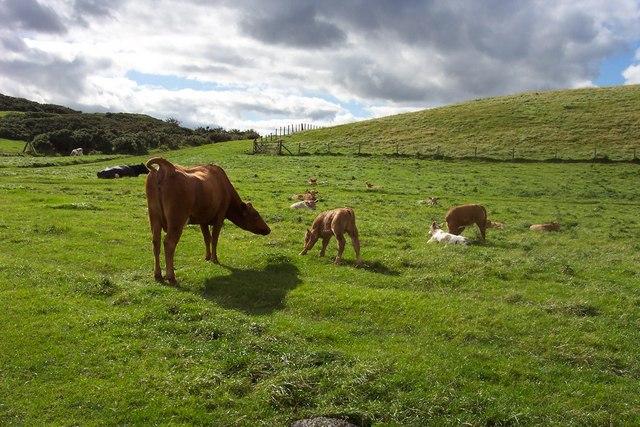 Pastoral scene near St Abbs Head