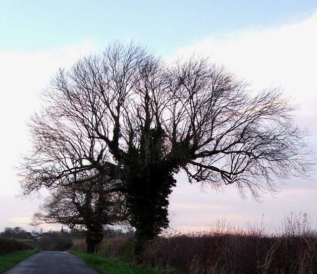 Trees on Orton Lane