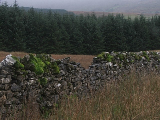 Drystone Wall and Forestry.