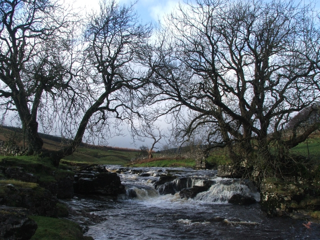 Waterfall and Trees on the Wharfe.