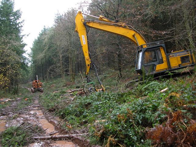 Logging in Slade Bottom, St Briavels