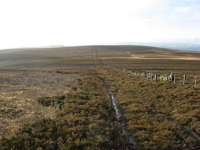 Peat Law from Hogs Law