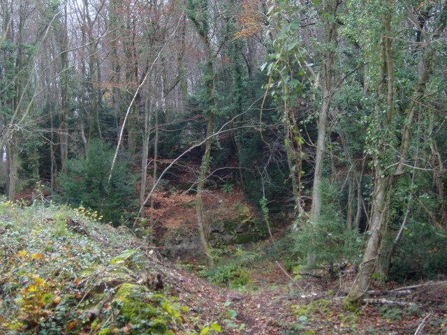 Bishop Barnett's Wood