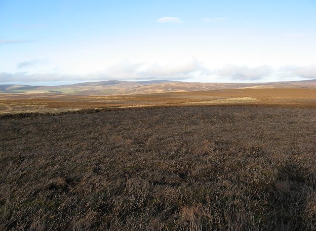 Burnt area, Hogs Law