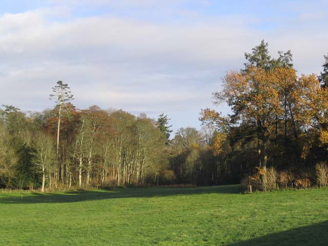 Woodland on the Newton Estate