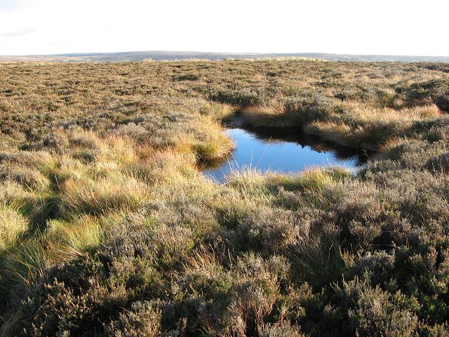 Peat pool, Wedder Law