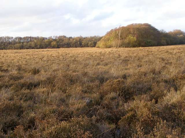 Matley Heath, northwest of Matley Wood, New Forest
