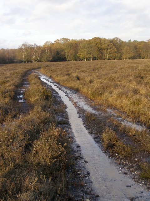 Waterlogged path on Matley Heath, approaching the Beaulieu River, New Forest
