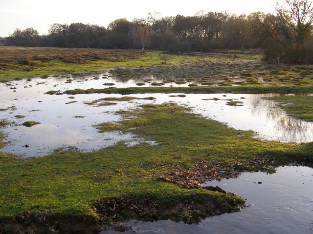 Waterlogged heath, west of Ashurst Lodge, New Forest