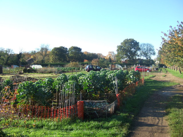 Allotments in South Wootton, Norfolk.