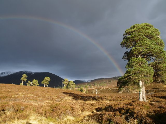 After the storm, Glen Quoich
