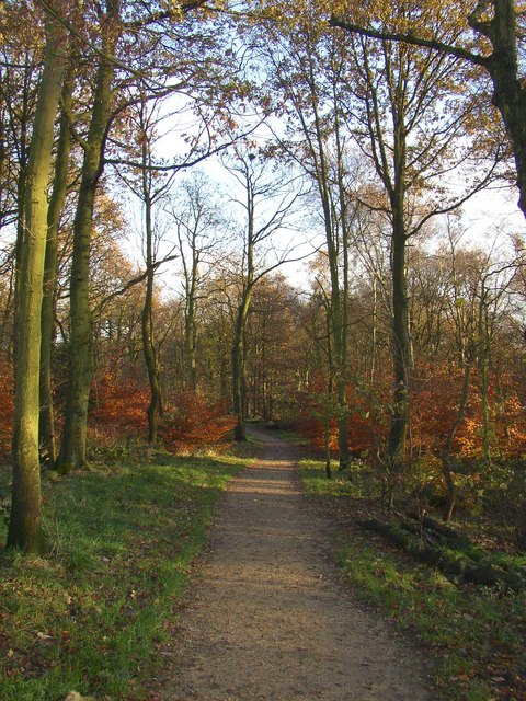 Path in North Cliffe Wood, Shipley