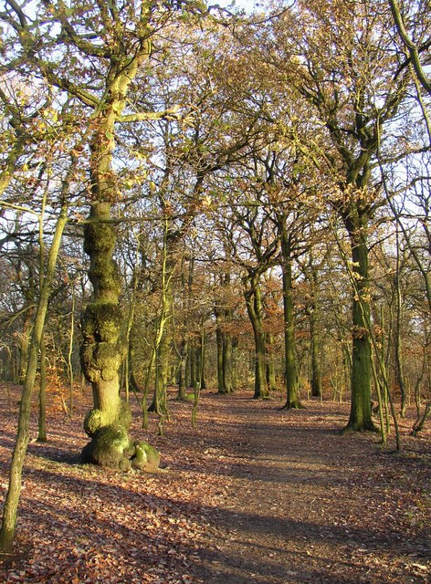 Path and trees in North Cliffe Wood, Shipley