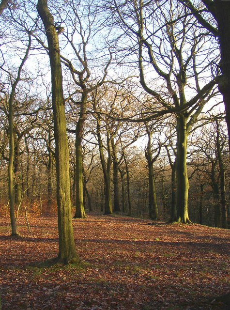 Trees in North Cliffe Wood, Shipley