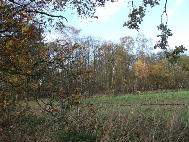 Trickley Coppice from Coppice Lane