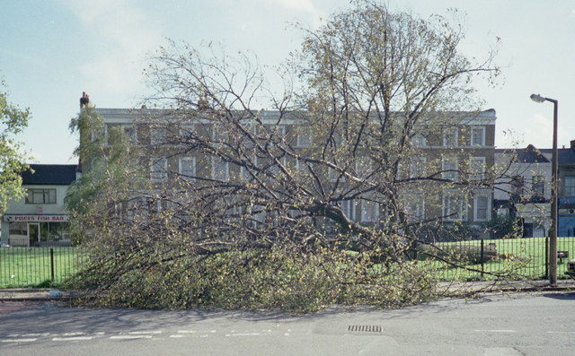 """Aftermath of the 1987 """"Great Storm"""""""