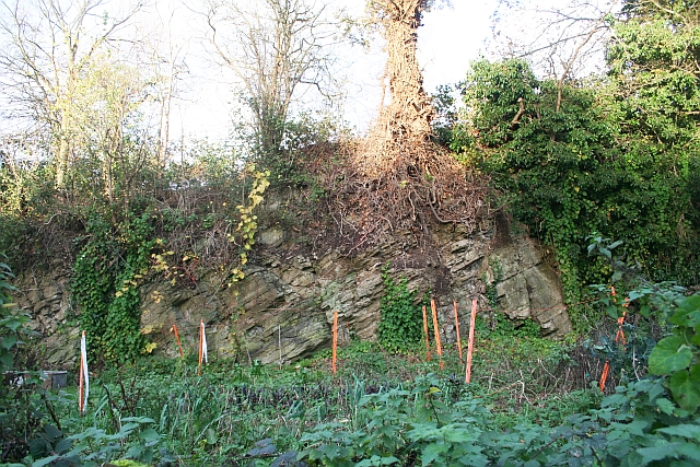 Old Quarry, Coombe Hill