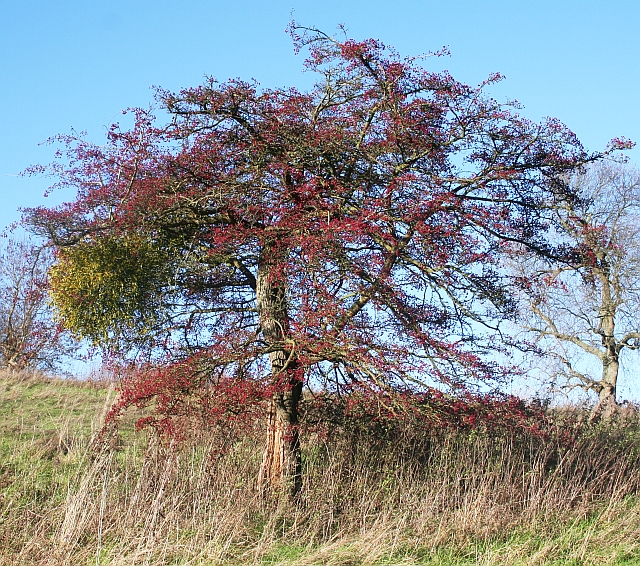 Hawthorn and Mistletoe, Hope End
