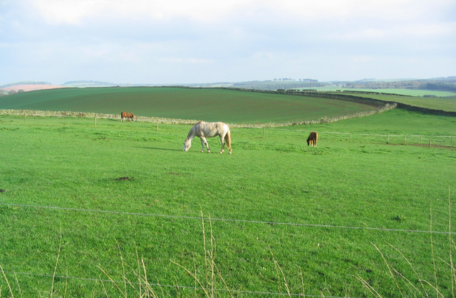 Horses at Grizzlefield Farm