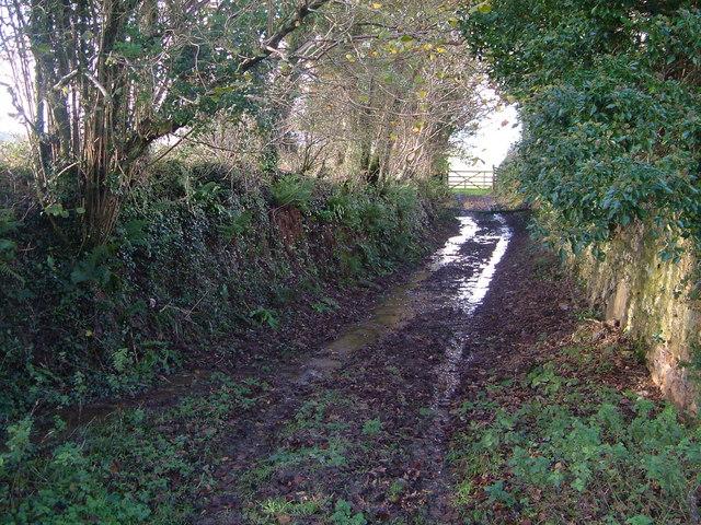 Damp footpath at Coyton