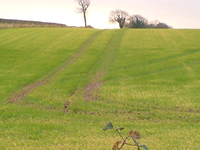 Field and tracks.