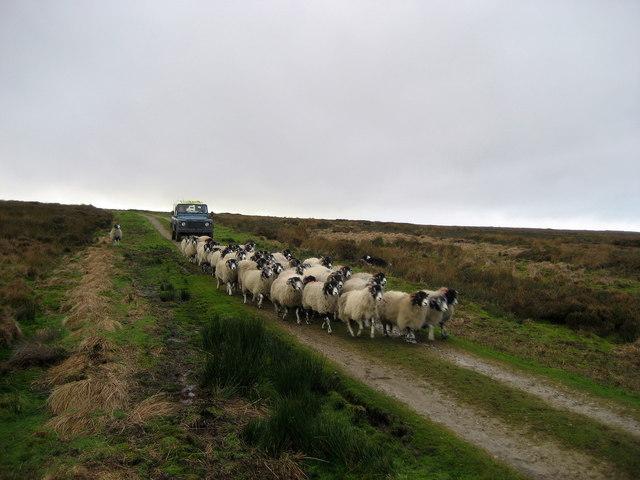 Mechanised Shepherd, Dallow Moor
