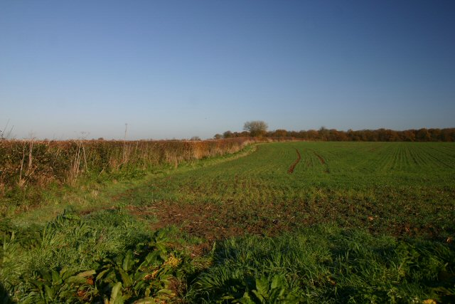 Farmland at Cockfield