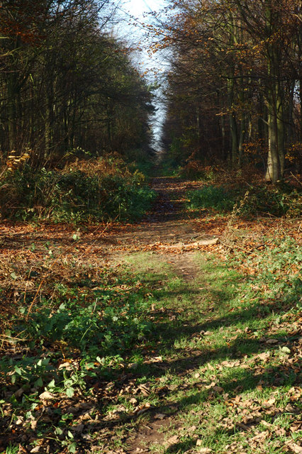 Heath Wood (2)