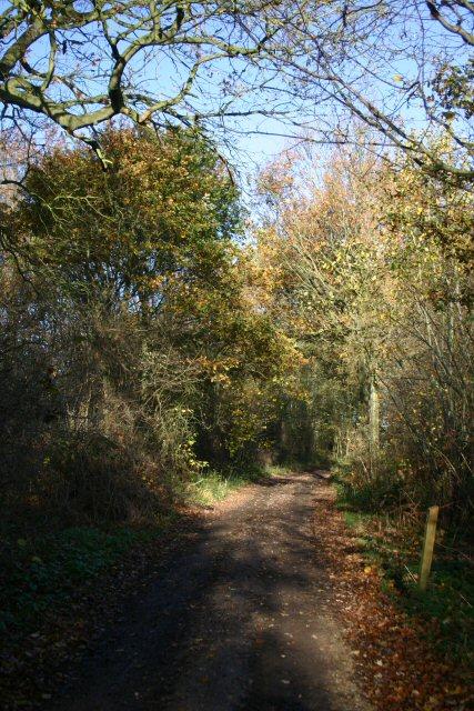 Track in Bradfield Woods