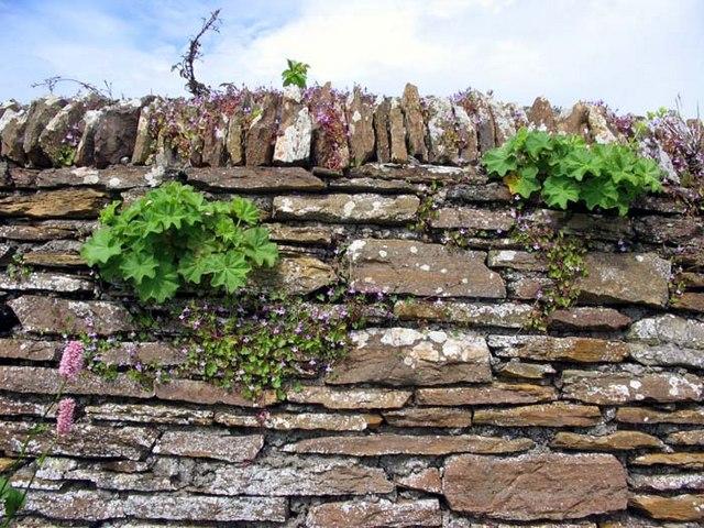 Wall around Stromness golf course