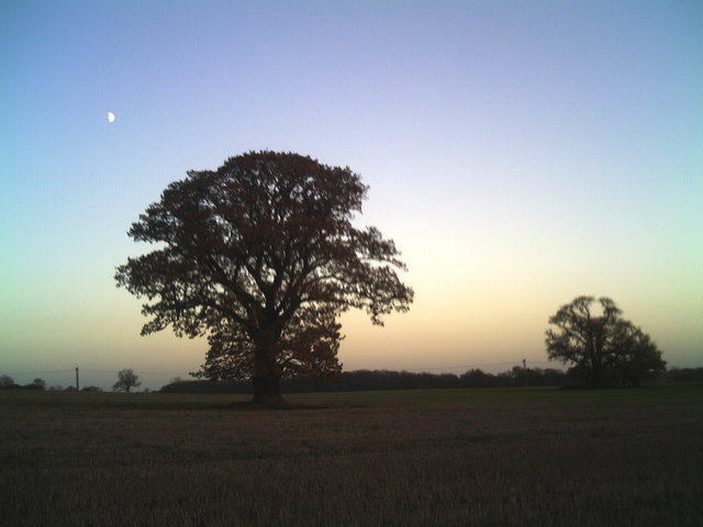 Tree silhouette near Witham