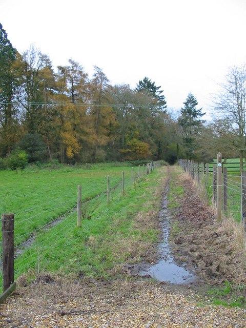 Bridleway Sandleheath Hampshire