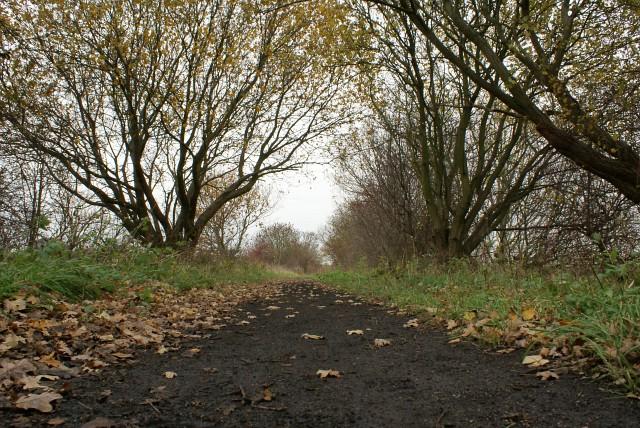 Teversal Trail between Skegby and Pleasley