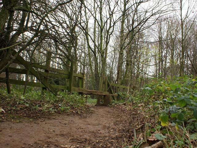 Roseland Wood near Scarcliffe