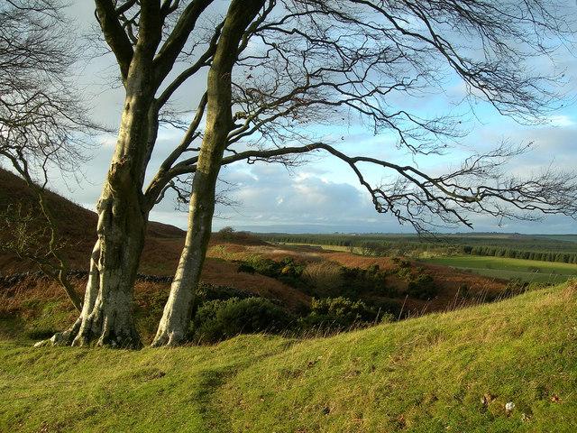 Towards Craigdow Farm