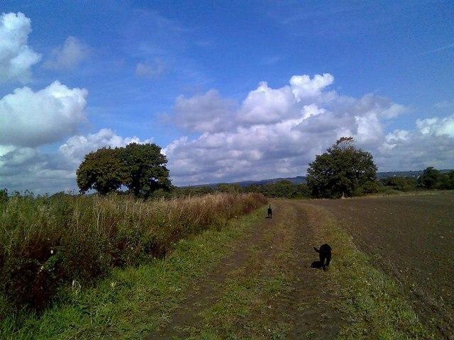 Fields below Elsted
