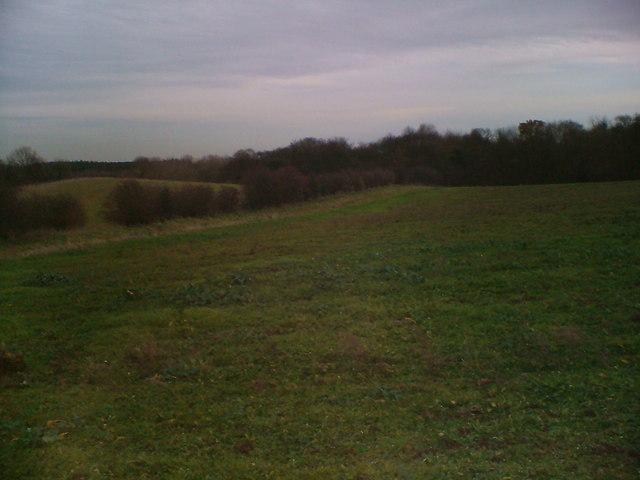 Roseland Wood