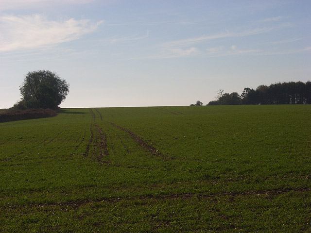 Farmland near Tidcombe