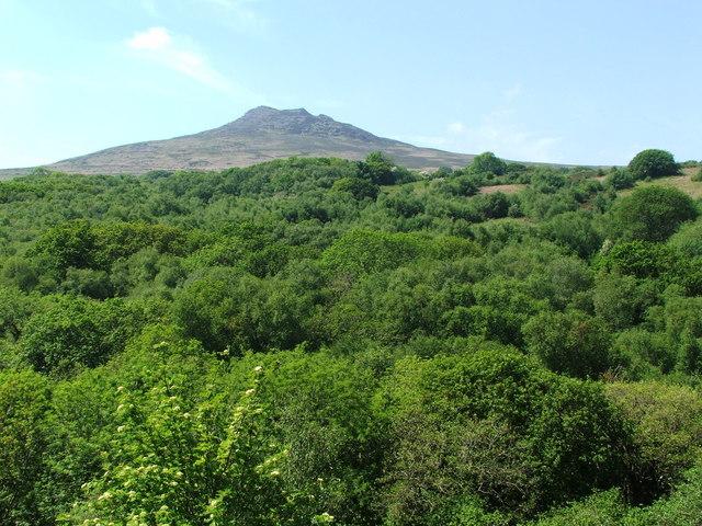 Carningli seen over Brithdir Mawr woodland