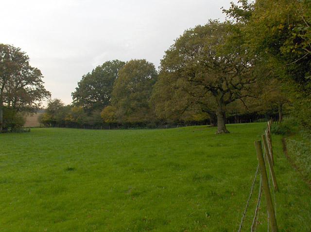 Woodland, Coldridge Bottom