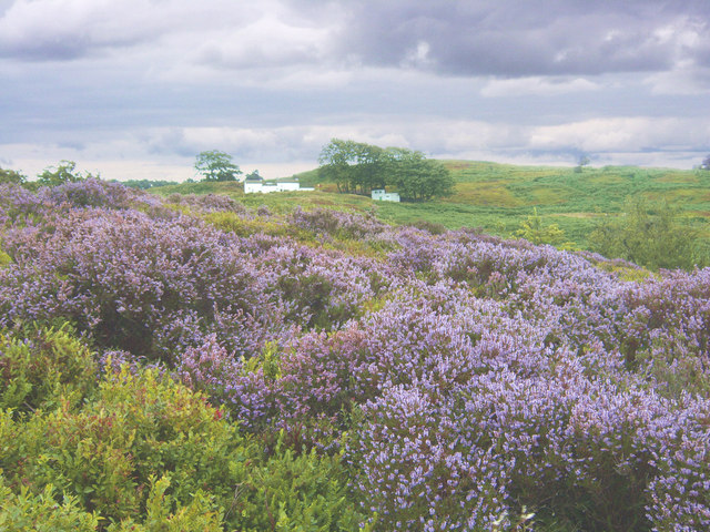 White Wells and Rombalds Moor in heather